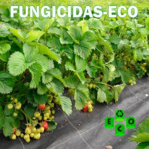 Fungicidas-eco