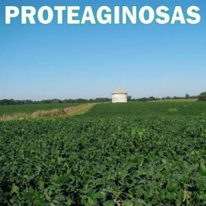 Proteaginosas