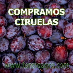 Compramos todo tipo de fruta, al mejor precio, pregúntanos. Hacemos las compras directamente del campo, cooperativa, etc. Pagos asegurados Pregúntanos y saldra ganando.